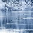 雪の中泳ぐカモ